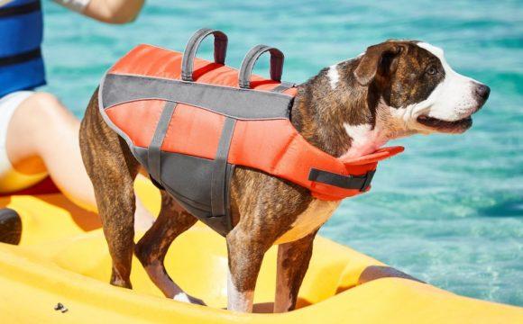 chien bateau jaune